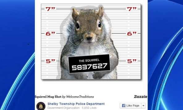 FUNNY,FUNNY IDENTITY: POLICE POST MUGSHOT OF A SQUIRREL AFTER TRUCKLOAD OF NUTS WAS STOLEN!
