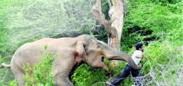 MAN IN CRITICAL CONDITION AFTER ELEPHANT ATTACK!