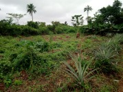 PLOTS OF LAND FOR SALE AT IKANGBA ESTATE IJEBU-ODE AND OPIC ESTATE AGBARA